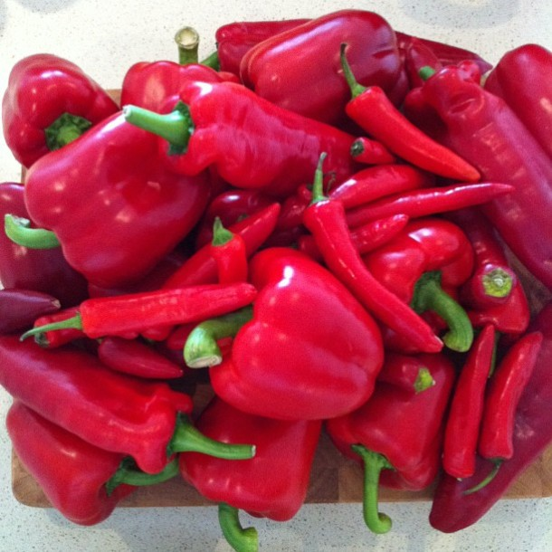 Red peppers and chillies